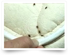Bed Bug Control Services Kollam