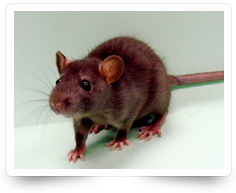 Rodent Control Services Kollam