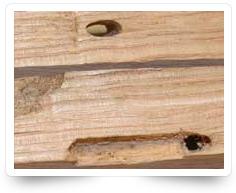 Wood Borer Control Services Kollam